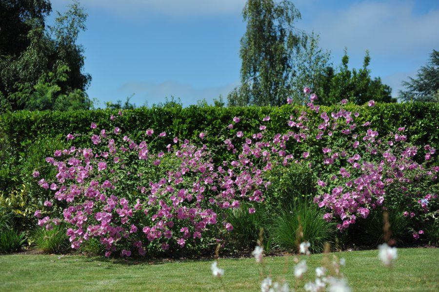 fleurs-spa-phytomer-saintmalo